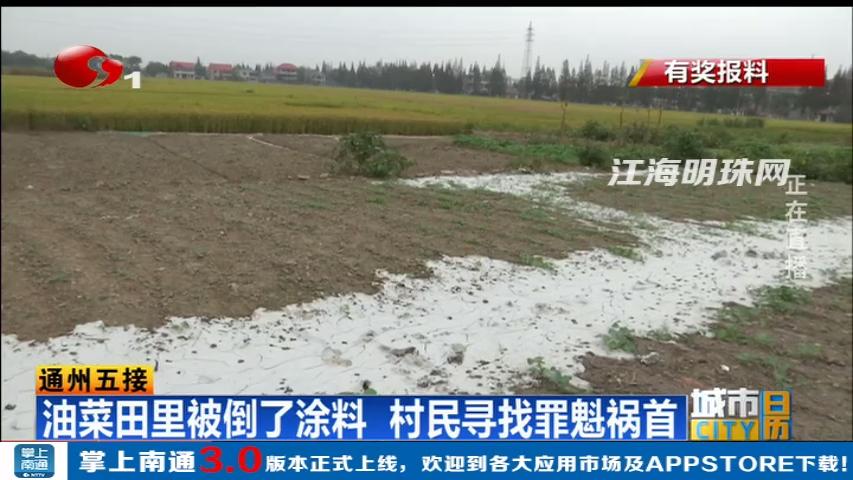 油菜田里被倒了涂料 南通通州村民寻找罪魁祸首