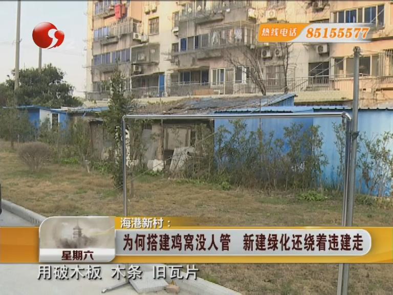 海港新村:为何搭建鸡窝没人管 新建绿化还绕着违建走