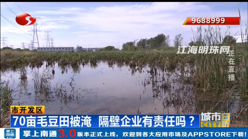 70亩毛豆田被淹 隔壁企业有责任吗?