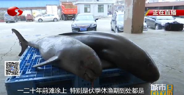 如东小洋口:两头江豚误撞渔网殒命  濒危物种亟待用心呵护