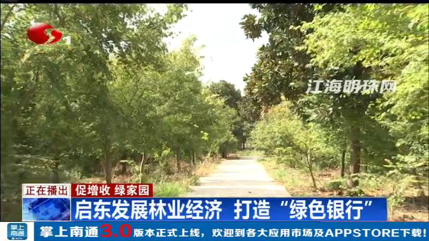 """促增收 绿家园 启东发展林业经济打造""""绿色银行"""""""