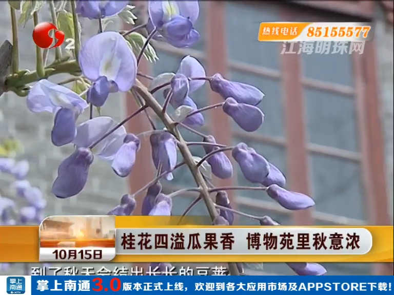桂花四溢瓜果香  博物苑里秋意浓