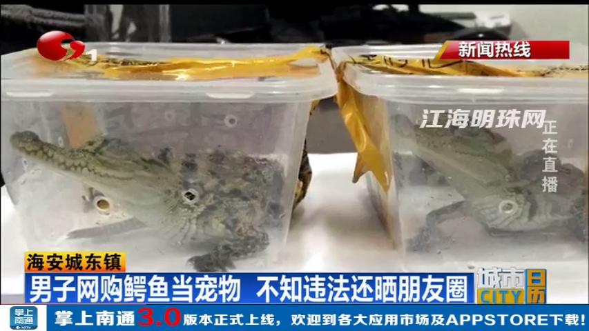 海安男子网购鳄鱼当宠物 不知违法还晒朋友圈