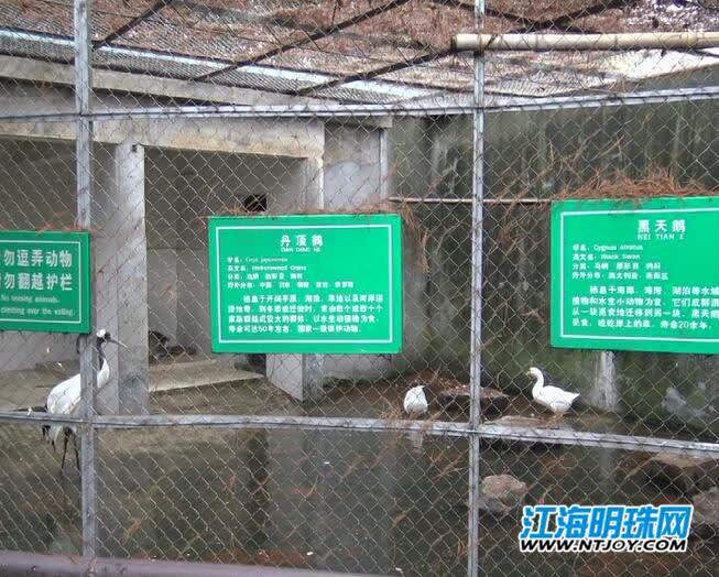 极寒天气到来 南通动物园里的动物们准备好过冬了吗?