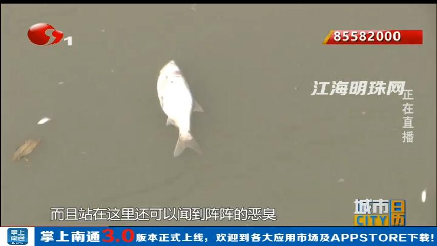 开发区:河面漂起大量死鱼 环保部门调查