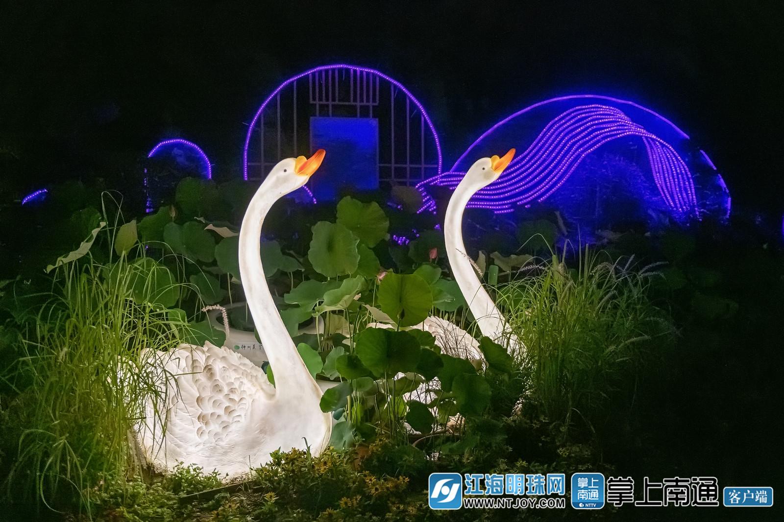 近日,夜晚的南通植物园华灯璀璨,各种造型的灯组五彩斑斓,美轮美奂,成了市民消暑纳凉的好去处。穿梭其间,恍如进入时光隧道,来到美丽的童话世界。100种品类的荷花遍布园内,珍贵品种比比皆是,蔚为壮观。(彭常青/摄)