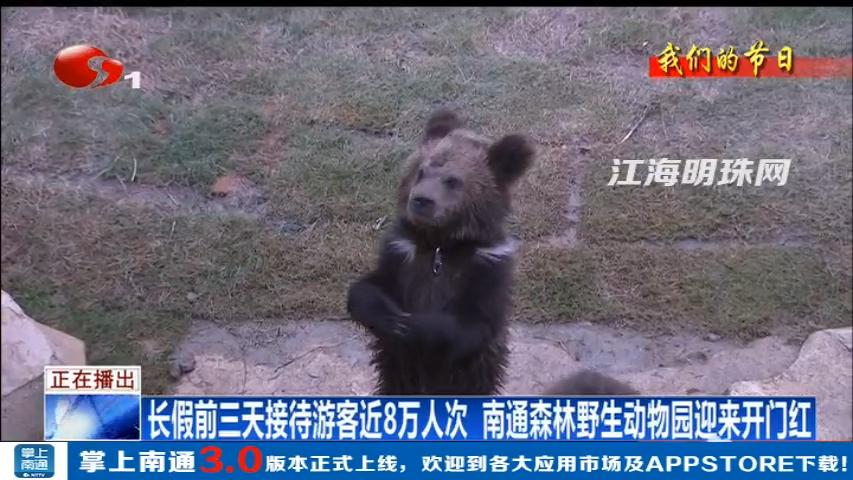 bte365手机版野生动物园国庆前三天接待游客近8万人次