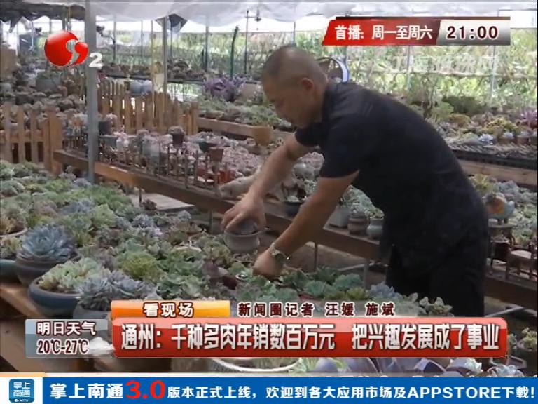 南通通州:千种多肉年销数百万元 把兴趣发展成了事业