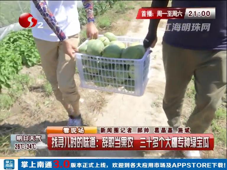 找寻儿时的味道:辞职当果农  三十多个大棚专种绿宝瓜
