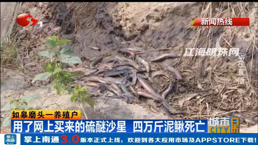 如皋:用了网上买来的硫醚沙星 四万斤泥鳅死亡